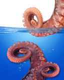 Octopus. Royalty Free Stock Photo