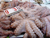 Octopus Royalty-vrije Stock Foto