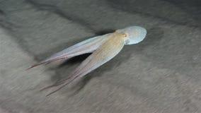octopus stock videobeelden