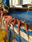 Octopus. Hanging out to dry, Naxos, Greece Stock Photos