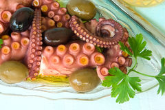 Octopus, appetizer Stock Photo