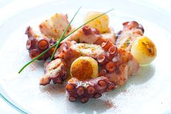 Octopus appetizer with small potatoes. Stock Photography
