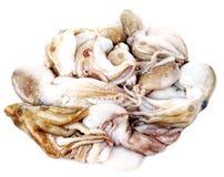 Octopus  - calamari seafood Royalty Free Stock Image