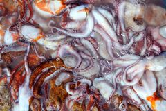 Octopus catch pattern from mediterranean sea Stock Image