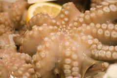 Octopus closeup Stock Images
