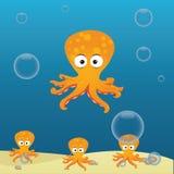 Octopus Stock Photos