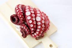 Octopus. Stock Image