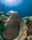 Octopus de Maldiven Royalty-vrije Stock Afbeeldingen