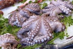 Octopus on display Stock Photos
