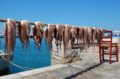 Octopus drying in greece naxos island royalty free stock photos
