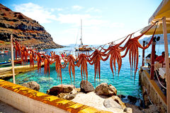 octopus   drying  in   greece santorini and light Royalty Free Stock Photography