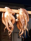 Octopus Drying, Naxos, Greece Stock Photography