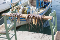 Octopus drying on a stick in Chania, Greece Royalty Free Stock Photos
