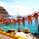 Octopus   drying  in the sun europe greece santorini and light Royalty Free Stock Photography