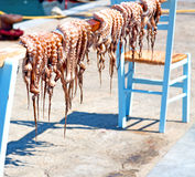 Octopus   drying  in  sun europe greece santorini and light Stock Image