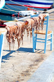 Octopus   drying  in the sun europe greece Royalty Free Stock Photography