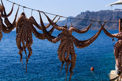 Octopus drying in the sun Royalty Free Stock Photos
