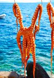 Octopus drying on the sun Stock Images