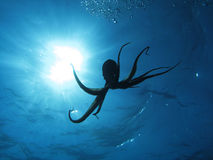 Octopus en zon royalty-vrije stock foto's
