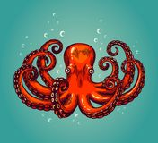 Octopus engraving. Vintage color engraving color illustration. Retro style card. Red octopus on blue background. Vector illustration Royalty Free Stock Photo
