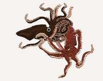 Octopus escaping. An octopus escaping from a squid arms Royalty Free Stock Photo