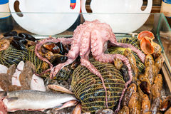 Octopus and fresh fish on delicacy market. Octopus and fresh fish on delicacy market Royalty Free Stock Image