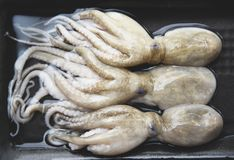 Free Octopus Fresh Raw Squid Seafood On Tray The Restaurant Royalty Free Stock Photos - 150856688