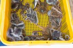 Octopus in gele mand voor verkoop bij vissenmarkt royalty-vrije stock foto