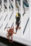 Octopus grabs scuba diver. A mock scene of a fake octopus grabbing a fake scuba diver is seen near Ripley's Believe it or Not in Newport, Oregon royalty free stock photo