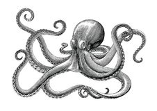 Free Octopus Hand Drawing Vintage Engraving Illustration On White Backgroud Stock Photos - 118609023