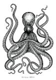 Octopus hand drawing vintage engraving illustration on white backgroud stock illustration