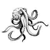 Octopus Royalty Free Stock Photos
