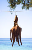 Octopus hanging to dry Stock Image