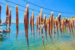 Octopus hanging to dry Stock Photos