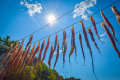 Octopus hanging to dry Stock Photo