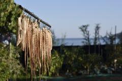 Octopus het hangen in de zon voor het drogen Stock Fotografie