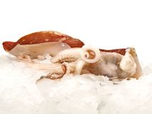 Octopus on Ice royalty free stock photo