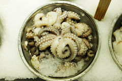 Octopus on Ice Stock Photography