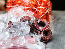 Octopus are on ice Royalty Free Stock Photos