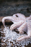 Octopus on ice Royalty Free Stock Images