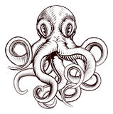 Octopus illustration Royalty Free Stock Image