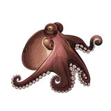 Octopus,  Illustration Stock Image