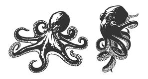 Octopus illustration vector illustration