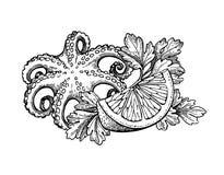 Octopus ink sketch. stock illustration