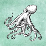 Octopus ink sketch Stock Image