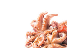 Octopus seafood Stock Image