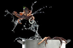 Octopus jumping out of pat. Isolated black Royalty Free Stock Photo