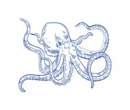 Octopus or Kraken drawn with contour lines on white background. Marine animal or mollusc with tentacles, deep sea. Creature, underwater inhabitant, ocean stock illustration