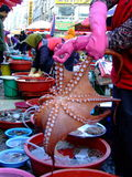 Octopus. Live octopus for sale in all its glory Stock Photography