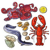 Octopus lobster eel mussel oyster seafood collection Royalty Free Stock Images